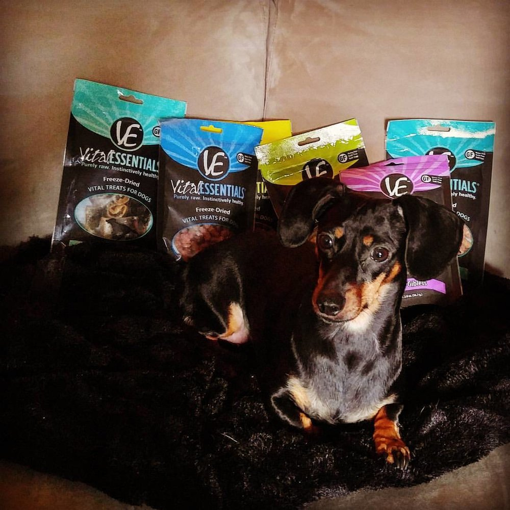 Our Honey dog LOVES her Vital Essentials!
