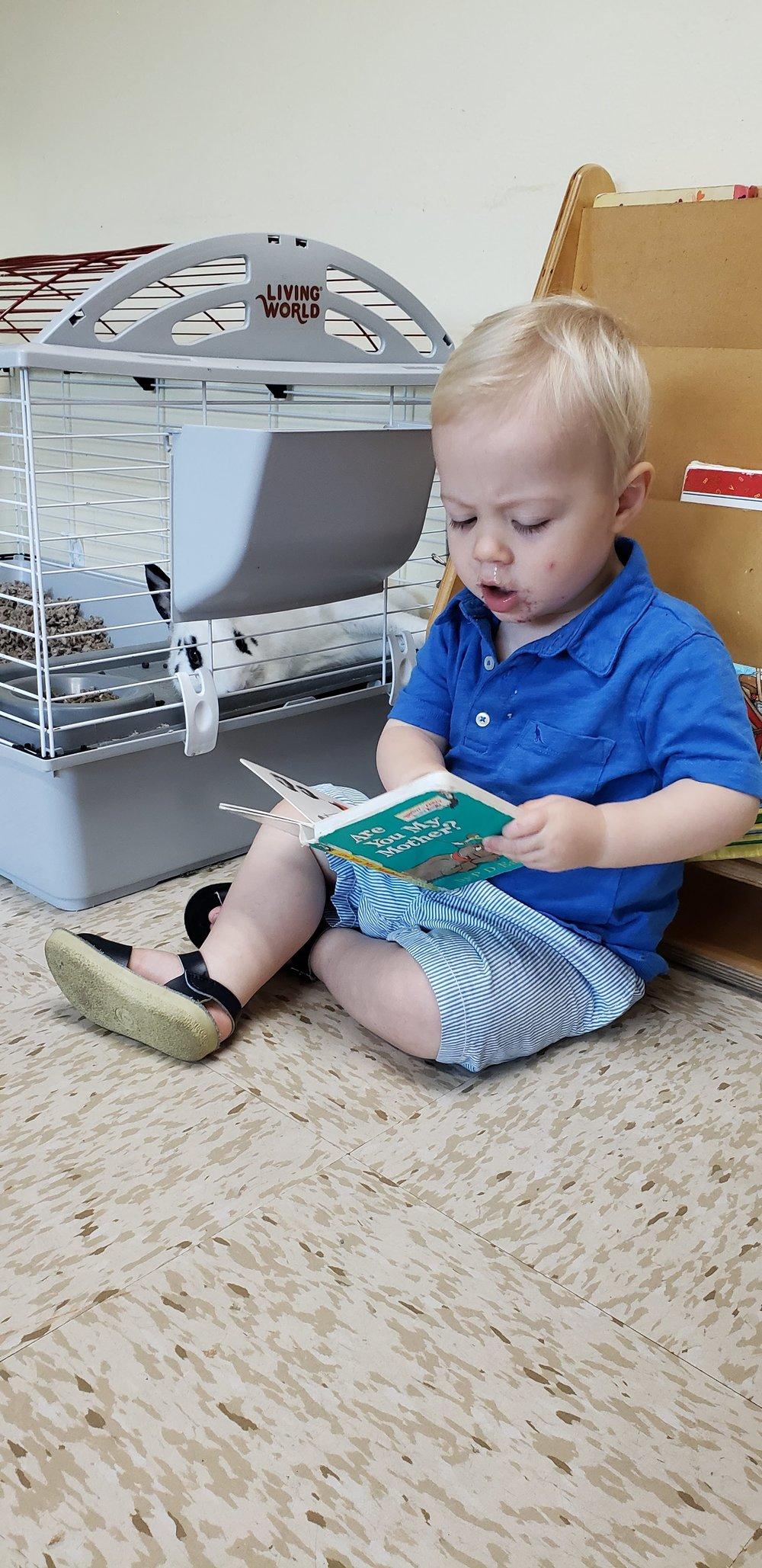 reading rabbit.jpg