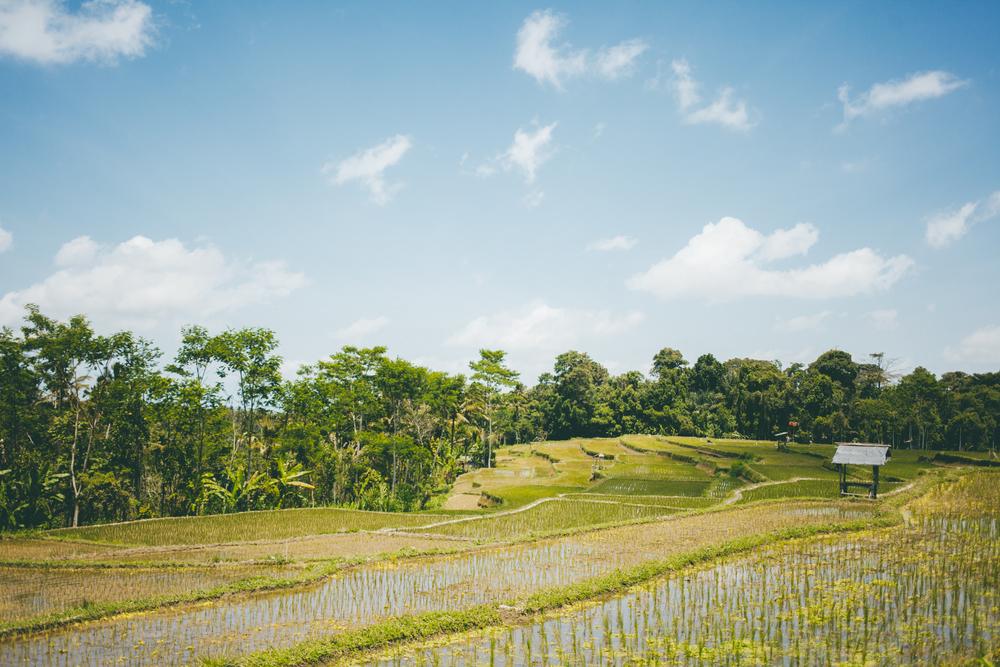 Bali-MARIANNA JAMADI-17.jpg