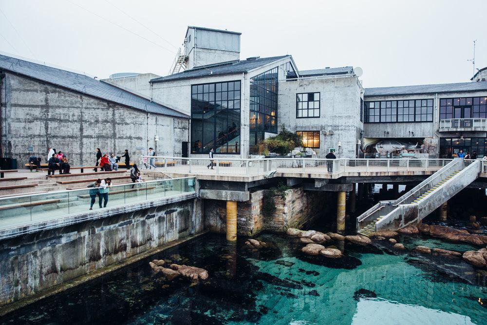 MONTEREY_Aquarium-27.jpg