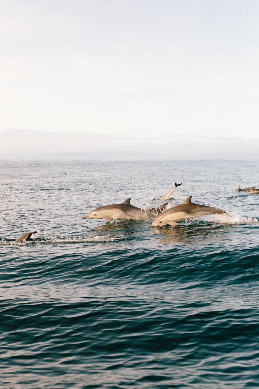 MONTEREY_Whale Watching-23.jpg