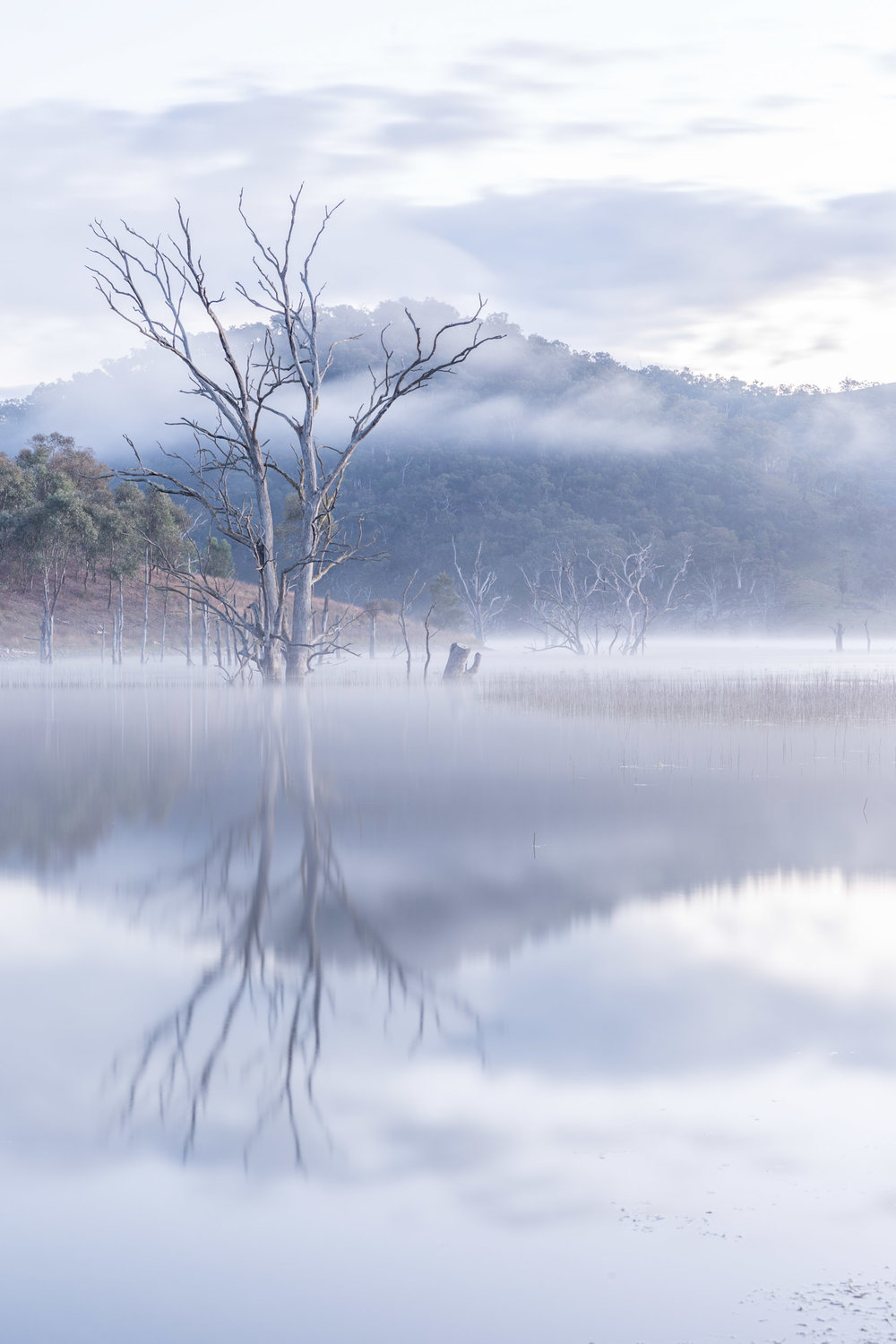 HELEN TRENERRY Photographer - Landscapes - Windamere Morning Mist