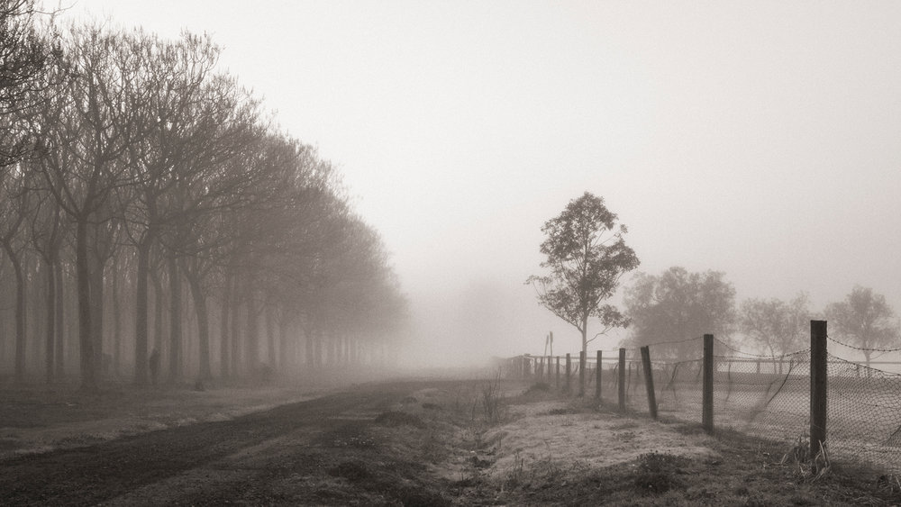 HELEN TRENERRY Photographer - Landscape - Foggy Lane