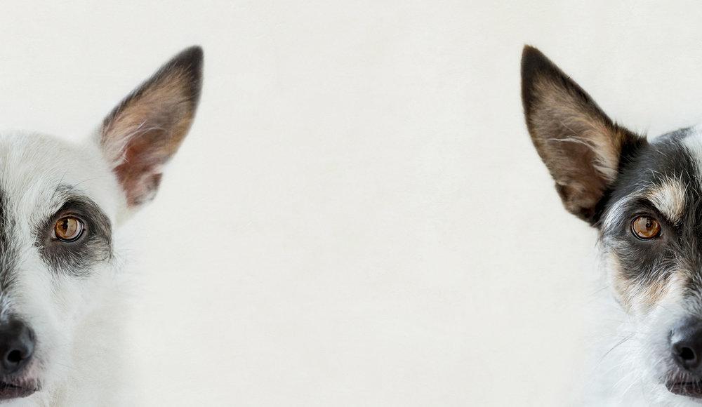 HELEN TRENERRY Photographer - Portrait - Split Personality