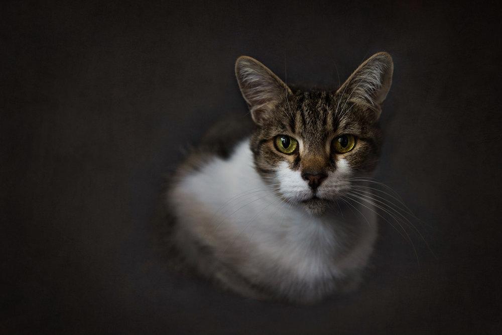 HELEN TRENERRY Photographer - Portrait - Lily