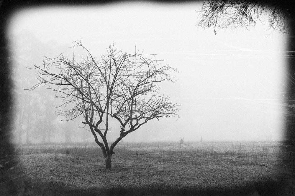 HELEN TRENERRY Photographer - Landscape - Foggy Tree