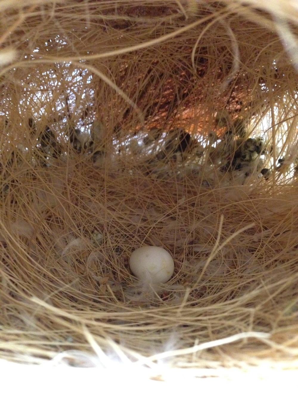 Het eerste eitje...