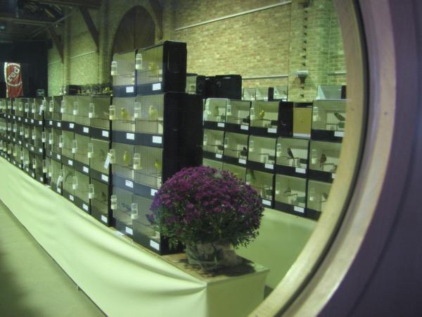 Een foto van enkele jaren terug, genomen op de tentoonstelling van De Witte Valk Opwijk door het venstertje van de deur aan de inkom.