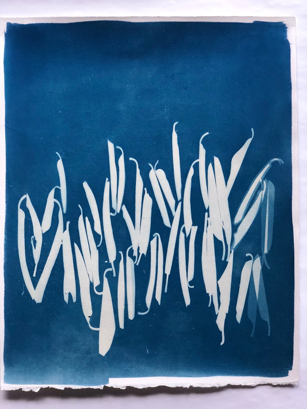 "Cyanotype A 16"" x 20"" by Amy Chase Gulden"