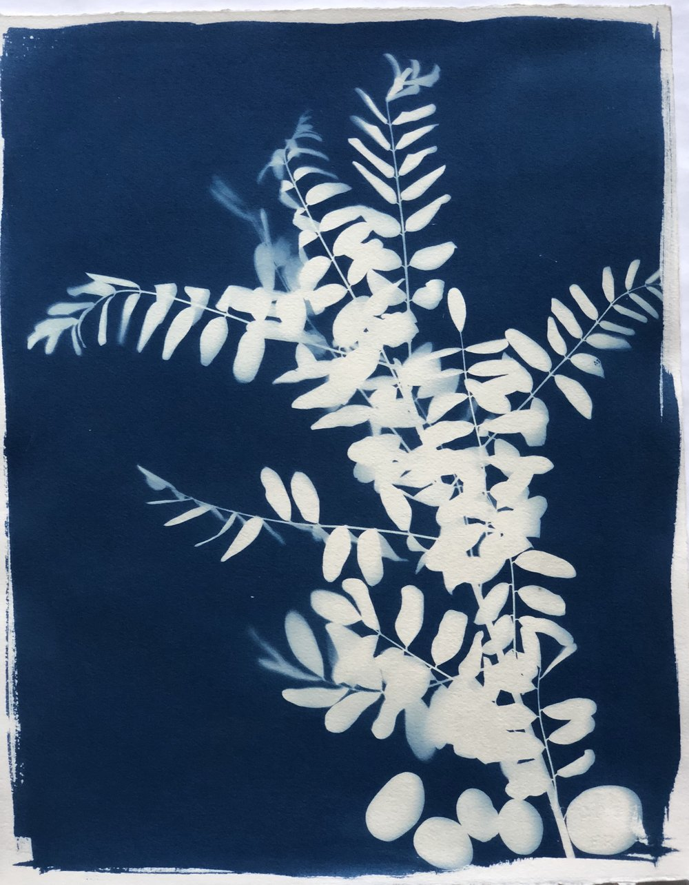"Cyanotype C 16"" x 20"" by Amy Chase Gulden"