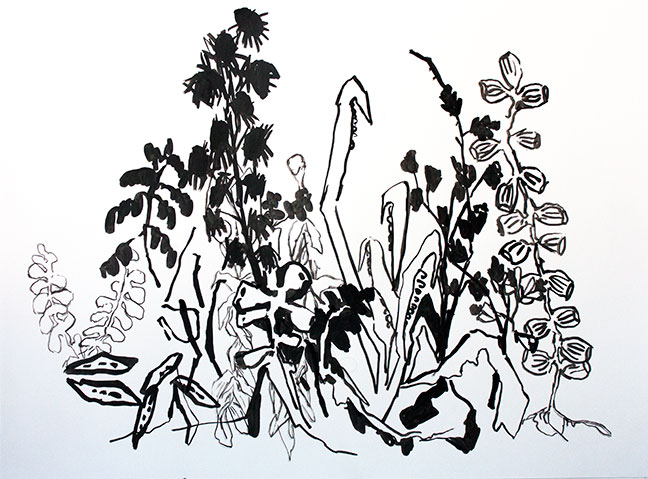 Botany Drawings I by Allison Gildersleeve