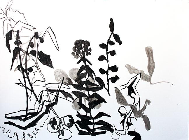 "Botany Drawings II 22"" x 30"""