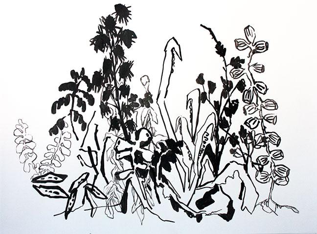 "Botany Drawings I 22"" x 30"""