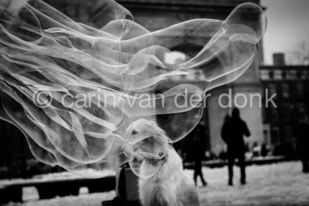 """Bubble"" December 2016 Washington Square Park 8"" x 12"""