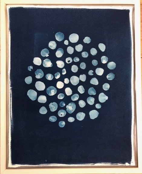 SOLD! Cyanotype - Toenail Shells by Amy Chase Gulden