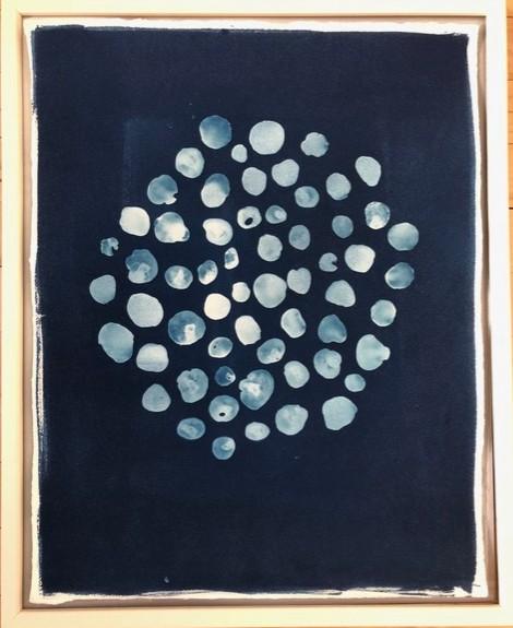 Cyanotype - Toenail Shells by Amy Chase Gulden