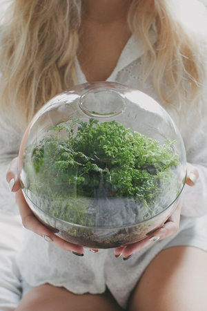 Terrarium Plants Best Terrarium Plants For Sale Online Melbourne