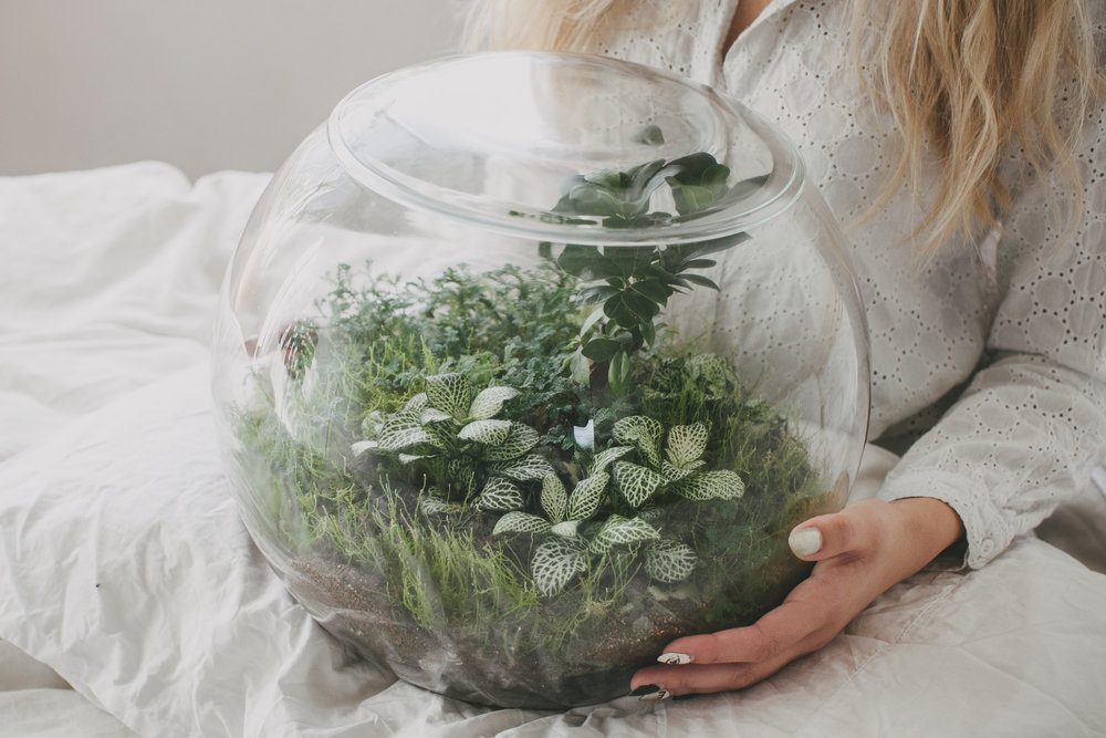 Best Terrarium Shop Supplies Online Melbourne Plant By Packwood