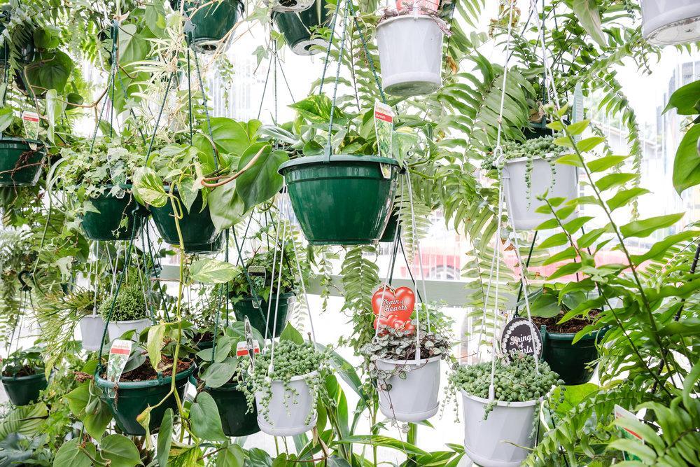 plantbypackwood_aaris_009.jpg