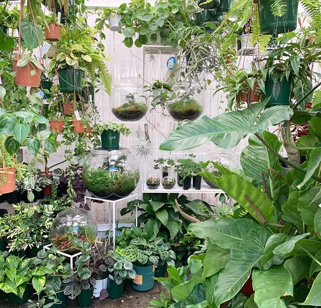Market Weekends ⌓⌇◡◦ Things are looking great in-store ahead of the weekend, folks! Thanks to @withplants for this shot of our lush greenhouse store as it is currently - see you all on Saturday at 10am! 😘🌿✨⌇◯⌢◦