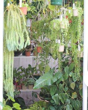 Best Terrarium Shop Supplies Online Melbourne Plant By Packwood