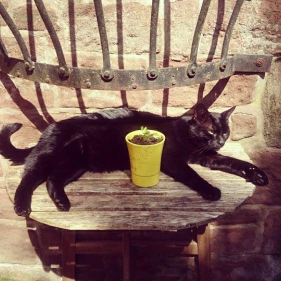 Large Cat; Small Table #catsofinstagram #nero