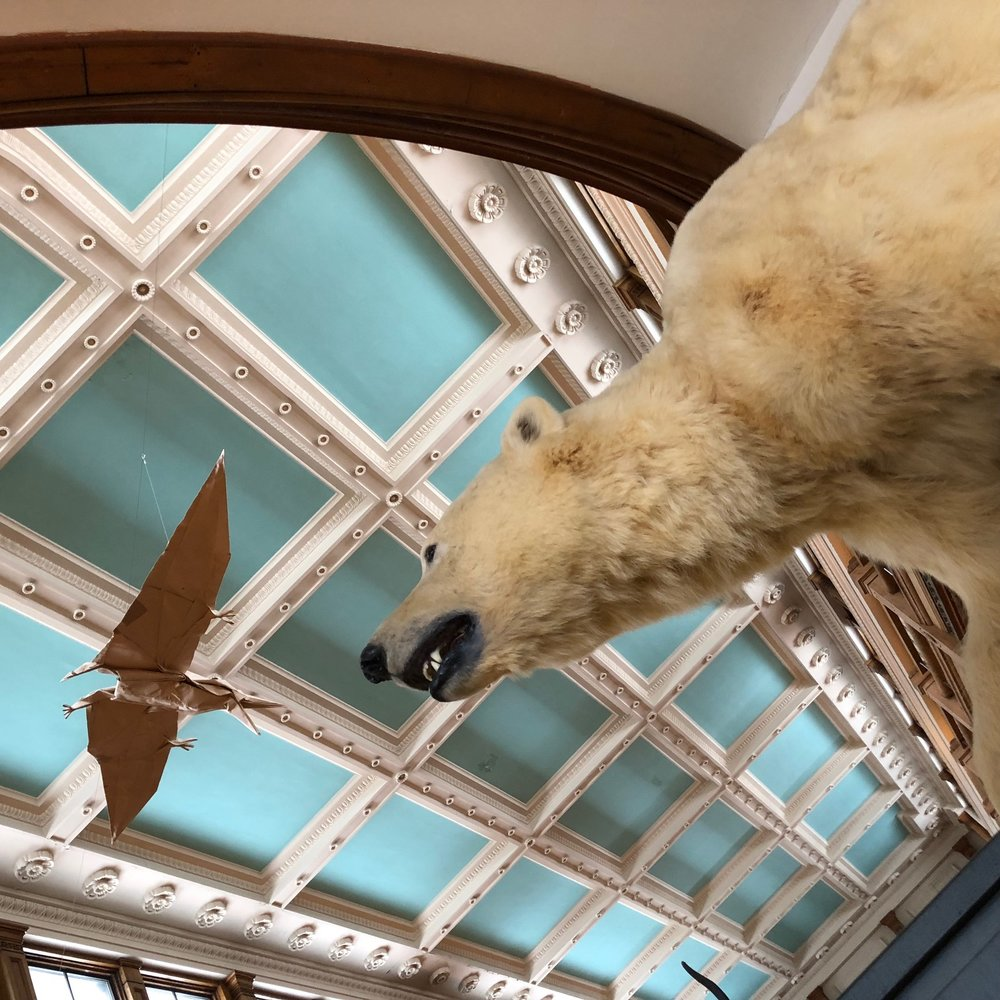 Polar Bear w ceiling redpath.jpg
