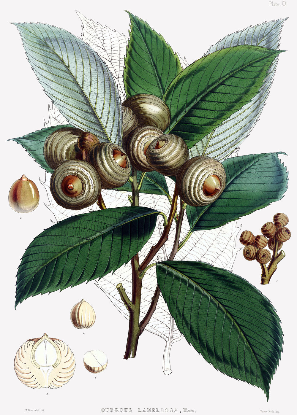 oak 7.jpg