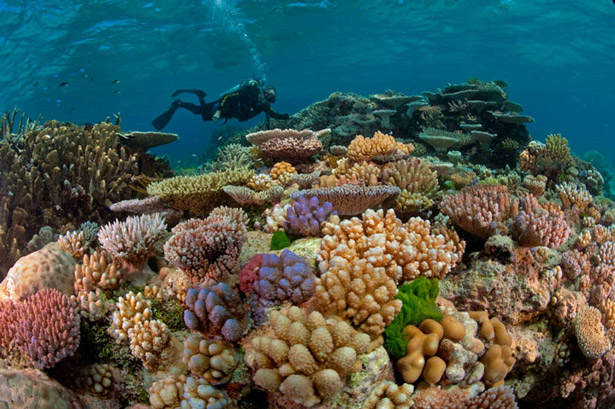 Diver among the corals, National Geographic. Photograph: David Doubilet