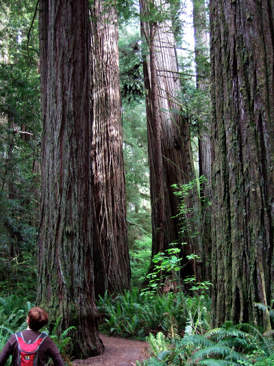 redwood national park, 2010
