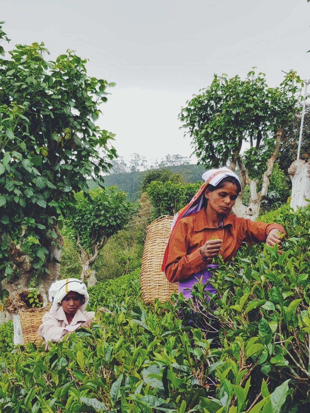 WUNDER ORIGINS - SRI LANKA TRAVEL TALES