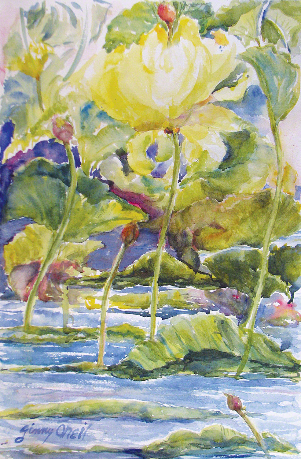 Lotus on the Pond
