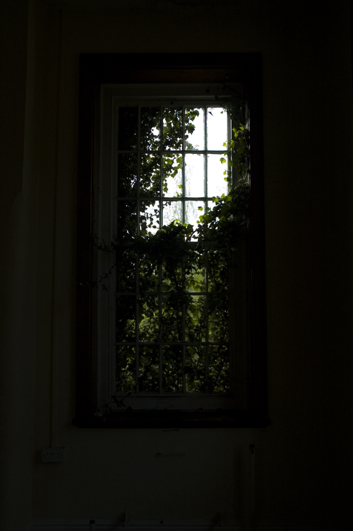 leafywindow.png