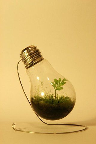 "homespothq :      Light bulb mini terrarium  Reminds me of the book ""The Invention of Air. Great Read."