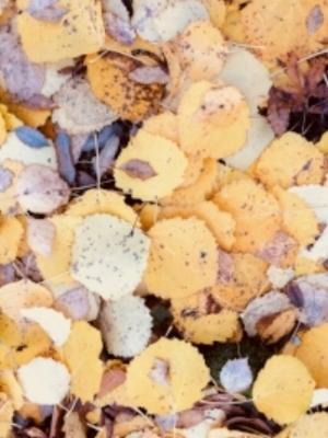 Kuolleet lehdet.jpg