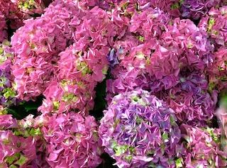 Kukkia5.jpeg