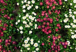 Kukkia8.jpeg