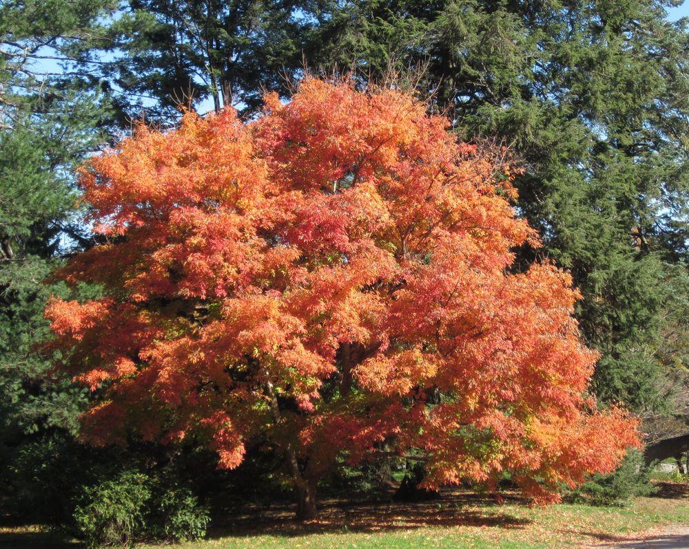 Harvard University's Arnold Arboretum, Jamaica Plain, MA