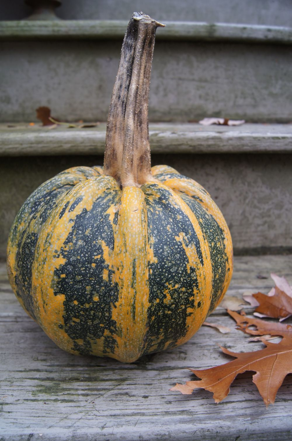 Squash, on a neighbor's front steps