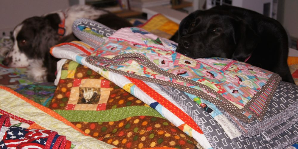Tipper, left, and Hazel guarding the quilts