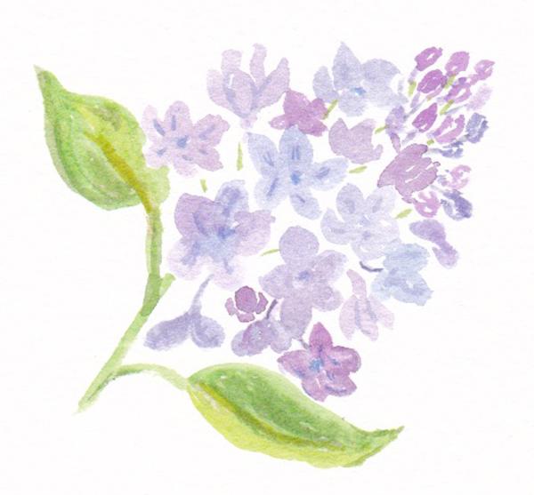 LilacNew.jpg
