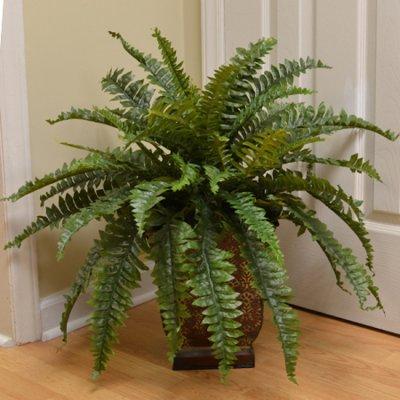 fake plant.jpg
