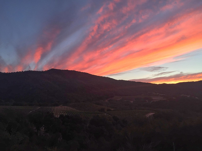 My dad snapped this pic of the sunset over a vineyard in Carmel Valley