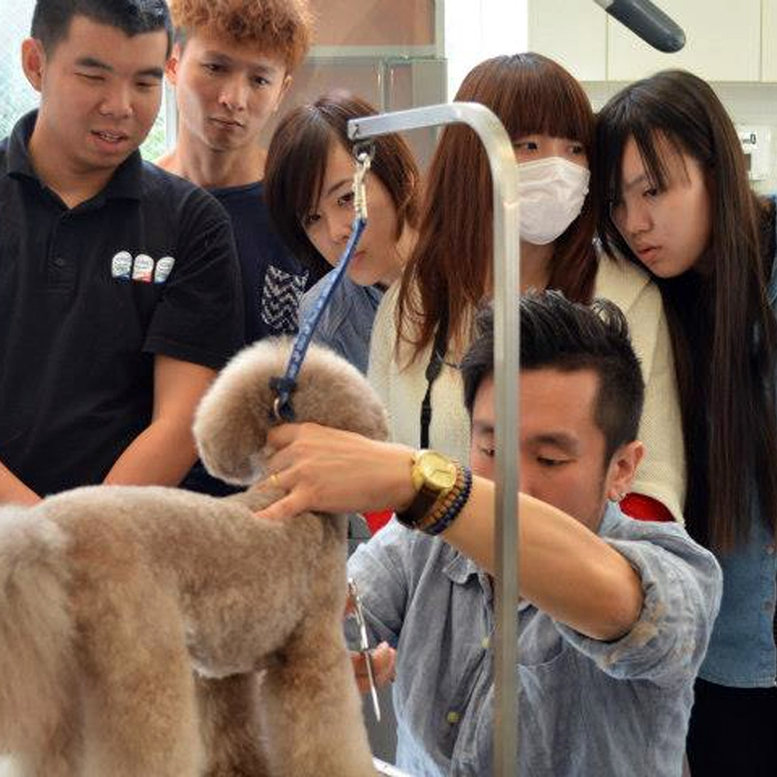 Photograph: Pet grooming expert in Tokyo using Japanese made Kissaki dog grooming shears.