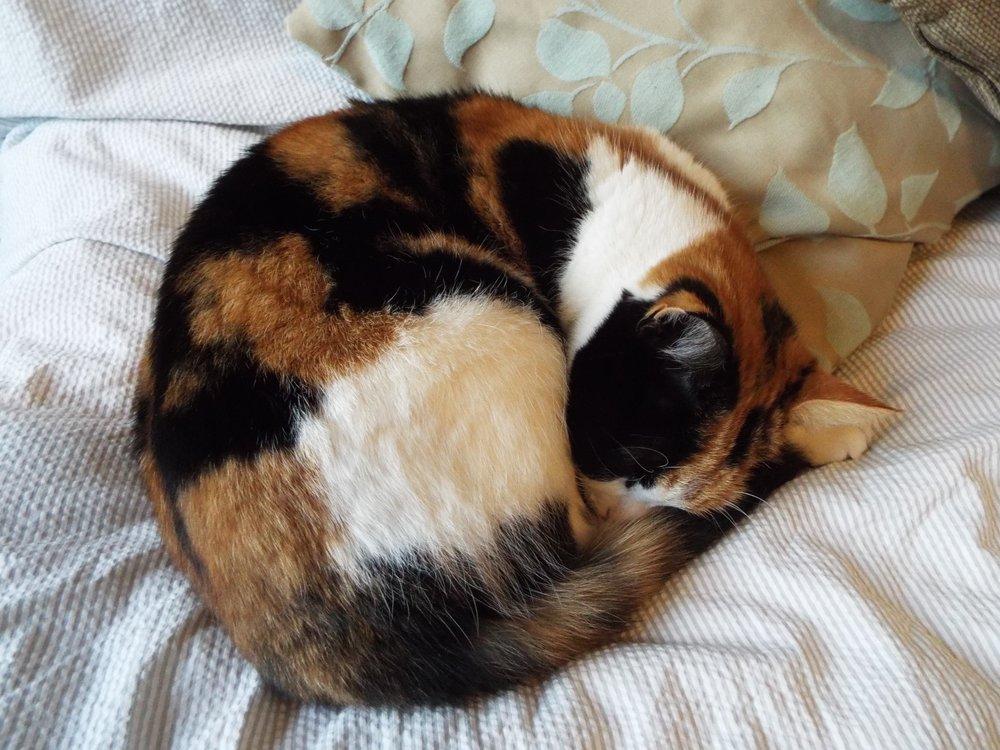 Gratuitous picture of Prim, Tara's cunning cat.