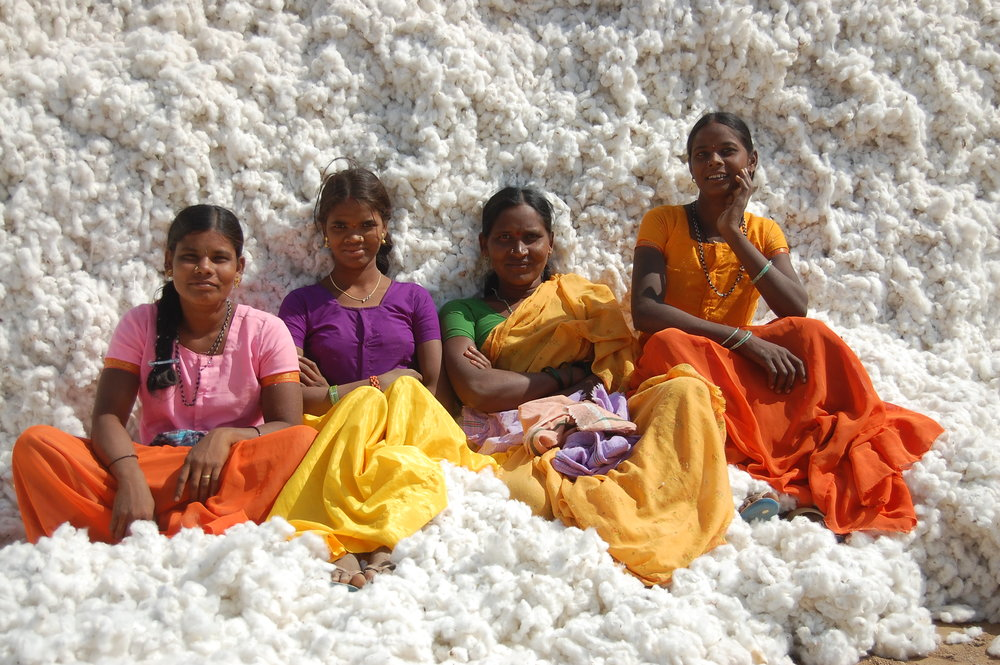 India is the second largest producer of cotton globally, behind China. Photo: Inspired Economist