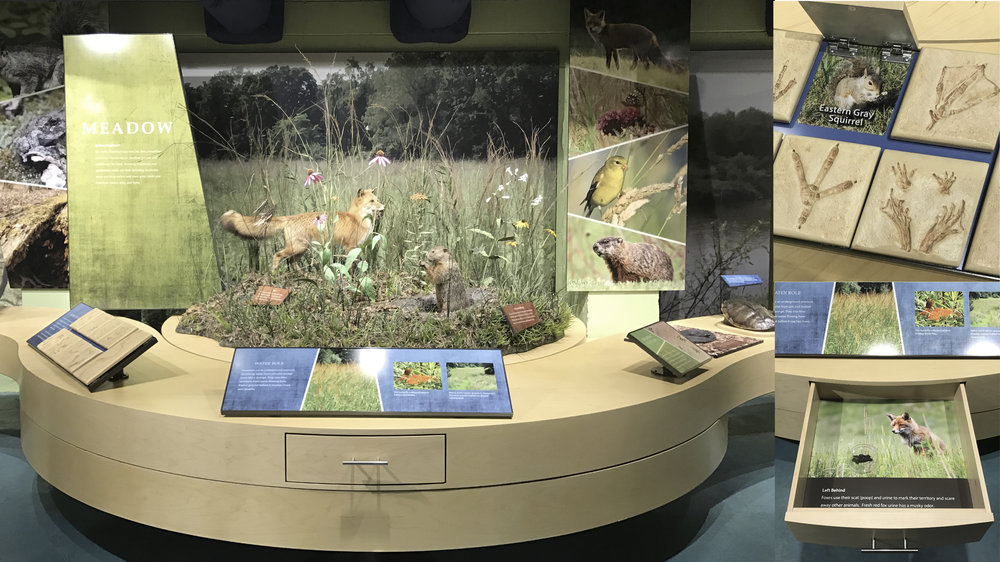 Meadow section of habitat / succession exhibit and some interactives.