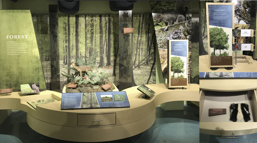 Forest section of habitat / succession exhibit and some interactives.