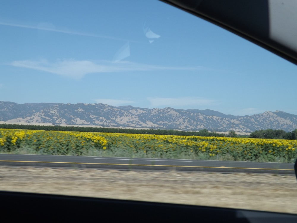 Sunday's road trip took us through mountains and past dreamy fields of sunflowers.