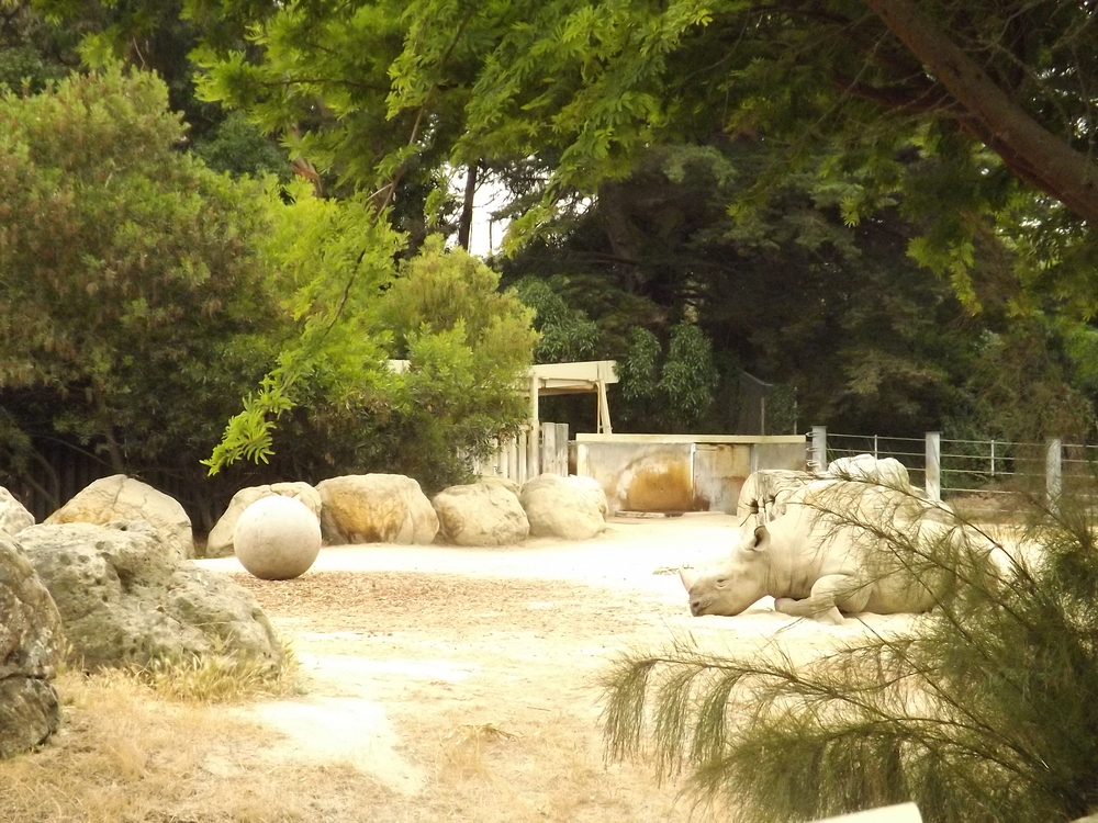 That boulder off to the right is actually a sleepyhead rhino. ;)